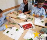 Projecte de les plantes de 2n EP